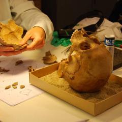 Estrids skalle och en referensskalle